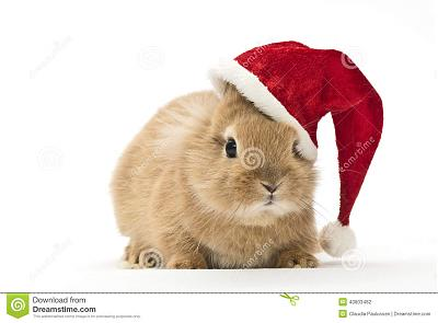 DELUGE IL A 15 ANS....ROUMANIE-rabbit-christmas-hat-baby-40803482.jpg