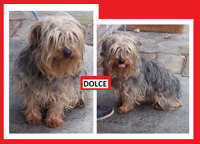 DOLCE M york jan 2012-dolce.png