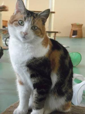 Dolly un amour de chat-dolly1.jpg