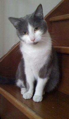 ECLIPSE Félinette de 2 ans cherche son adoptant-eclipse-29-08-2011-photo-2-.jpg