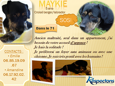 Extrême urgence pour Maykie !!!! Association Respectons (89)-affichemaykie.png