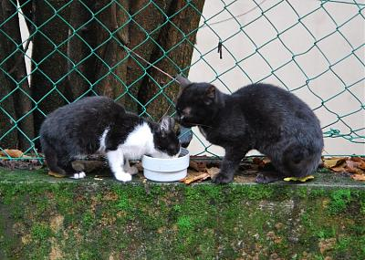 FA quarantaine pour 2 chatons (38)-2_chat10.jpg