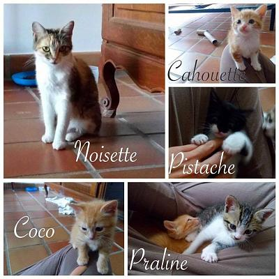 FAMILLE A ADOPTER-21766592_1984664378443537_2949537233358759820_n.jpg