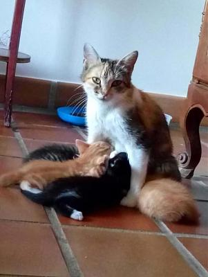 FAMILLE A ADOPTER-noisette-chatons.jpg