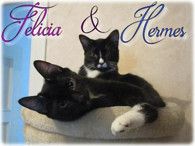 Felicia & Hermes - adoption 38-felicia-and-hermes-id-2.jpg
