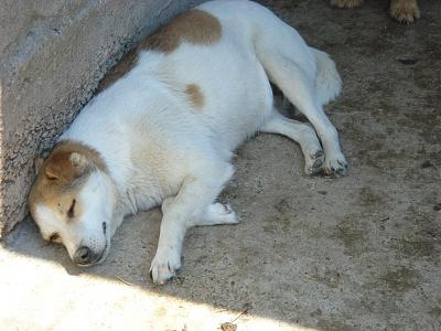 FICELLE - CHIENNE DE 7 ANS -  TAILLE MOYENNE - REFUGE ALINA-21764920_2002348843335883_1198548404734498339_n.jpg
