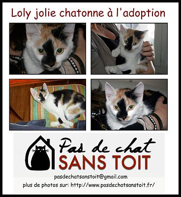 Galia jolie chatonne junior à l'adoption sous PAS DE CHAT SANS TOIT (79)-sans-titre-1.jpg