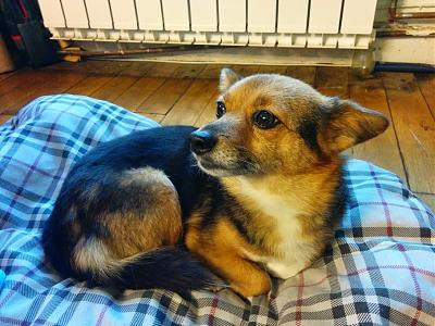 Gally, adorable petite chienne de 4 ans-img_20141231_165435.jpg