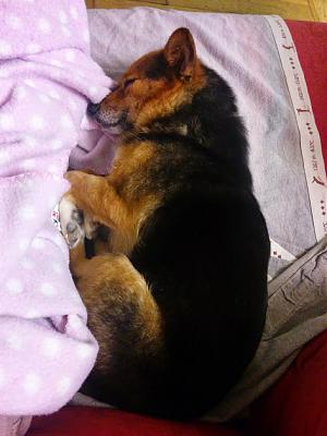 Gally, adorable petite chienne de 4 ans-img_20150101_200757.jpg
