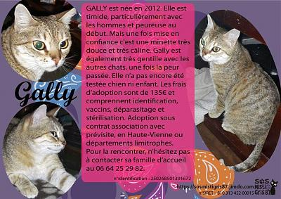 Gally, à l'adoption !-4335c82a-a6bb-4b76-b43b-3fe147f178ac.jpeg