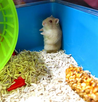 GROSSE URGENCE pour 2 hamsters-you.jpg