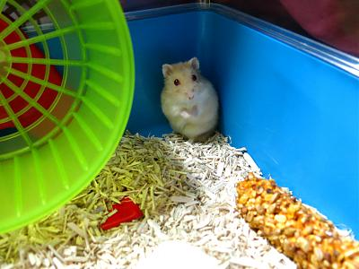 GROSSE URGENCE pour 2 hamsters-you2.jpg