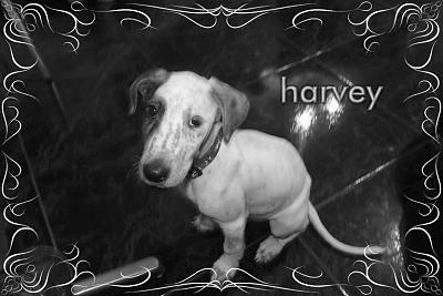Harvey-M-2mois1/2 type setter non lof(LTT2C)-harvey.jpg