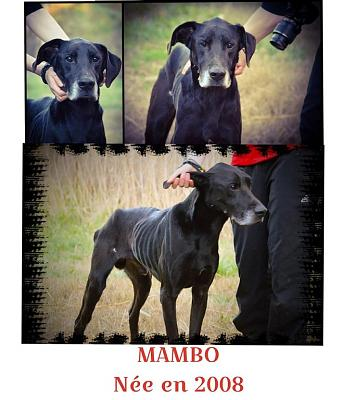 HELP pour MAMBO x Dogue Allemand-10520851_762172160525445_8275639440997048945_n.jpg