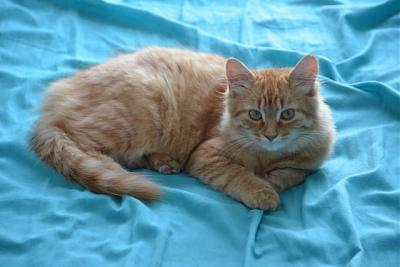JAZZY- femelle junior- FELIN POSSIBLE- à adopter.-jazzy.jpg