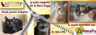 Journée d'Adoption de chats adultes par l'association CATSCITY CERGY (95)-catscity.jpg