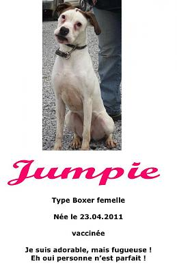 Jumpie, type boxer de 1 an (59)-jumpie.jpg