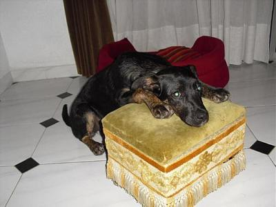 Kira adorable louloute 3 ans attend sa famille (Grenade, Espagne)-a_161329555208.jpg