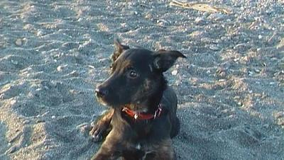 Kira adorable louloute 3 ans attend sa famille (Grenade, Espagne)-a_161329555210.jpg