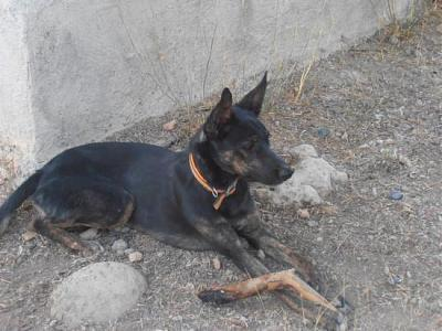 Kira adorable louloute 3 ans attend sa famille (Grenade, Espagne)-a_161346228238.jpg