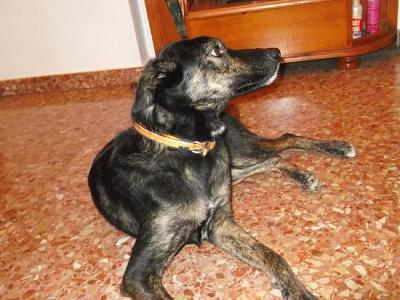 Kira adorable louloute 3 ans attend sa famille (Grenade, Espagne)-a_161360765628.jpg