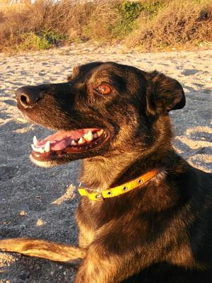 Kira adorable louloute 3 ans attend sa famille (Grenade, Espagne)-a_161360765630.jpg