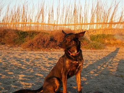 Kira adorable louloute 3 ans attend sa famille (Grenade, Espagne)-a_161360765634.jpg
