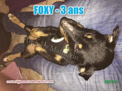 **A L'ADOPTION** FOXY (3 ans)-foxy-modif-01.jpg