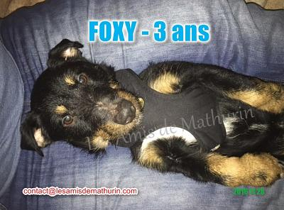 **A L'ADOPTION** FOXY (3 ans)-foxy-modif-03.jpg