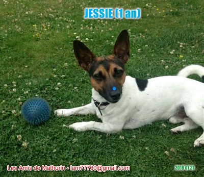 **A L'ADOPTION** JESSIE (1 an)-jessie-2.png