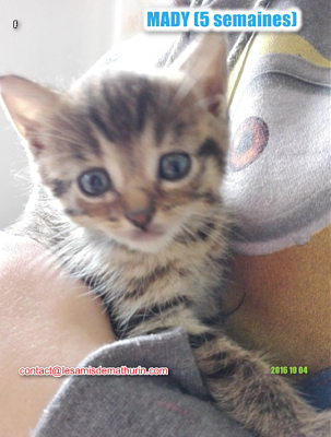 **A L'ADOPTION**MADY (5 semaines)-madymodif3.png