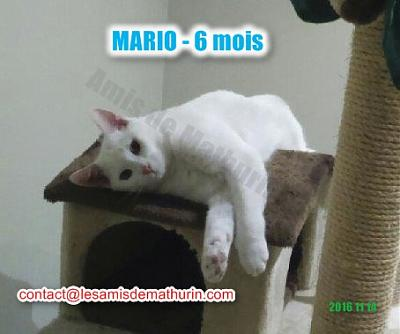 **A L'ADOPTION ** MARIO (6 mois)-mario-modif-04.jpg