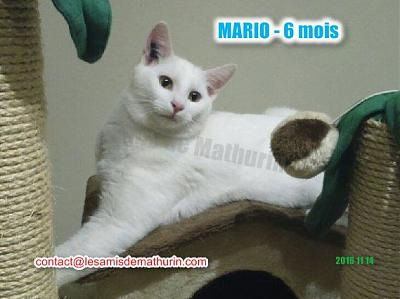**A L'ADOPTION ** MARIO (6 mois)-mario-modif-05.jpg