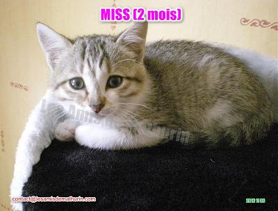**A L'ADOPTION** MISS (2 mois)-miss-modif-01.jpg