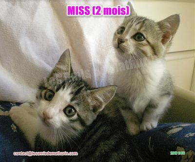 **A L'ADOPTION** MISS (2 mois)-miss-modif-02.jpg