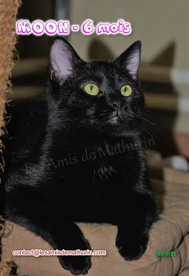 **A L'ADOPTION** MOON (6 mois)-moon-03.jpg