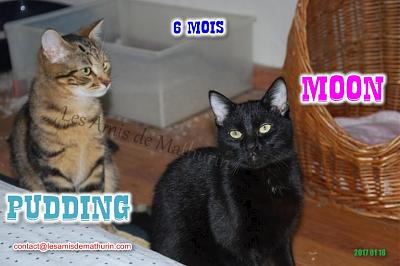**A L'ADOPTION** MOON (6 mois)-moon-pudding-01.jpg