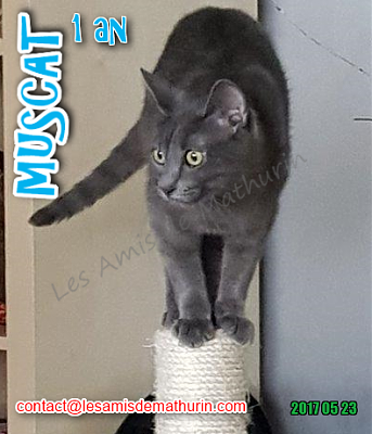 **A L'ADOPTION - MUSCAT** (1 an)-muscat-mai-04.png
