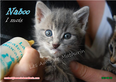 **A L'ADOPTION** NABOO (1 mois)-naboo-01.png