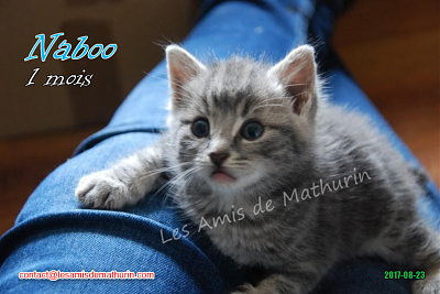 **A L'ADOPTION** NABOO (1 mois)-naboo-04.png