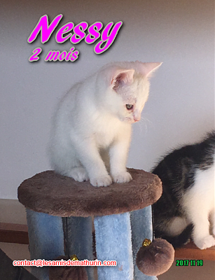 **A L'ADOPTION - NESSY (2 mois)**-nessy-02.png