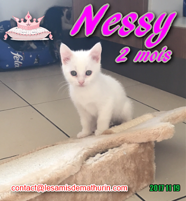 **A L'ADOPTION - NESSY (2 mois)**-nessy-03.png
