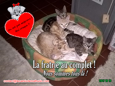 **A L'ADOPTION - RAOUDI (2 mois)**-fratrie.png