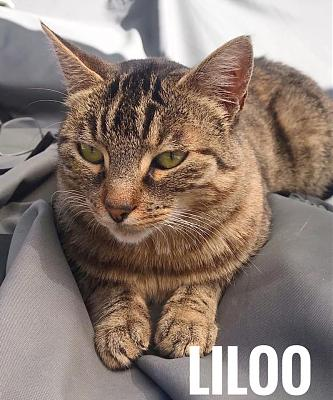 Liloo, à l'adoption-b.jpg