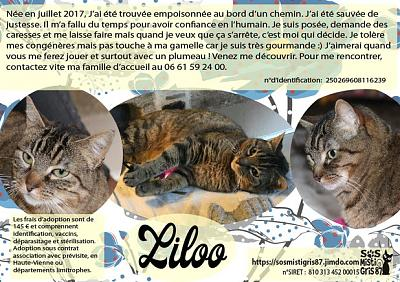 Liloo, à l'adoption-liloo.jpg