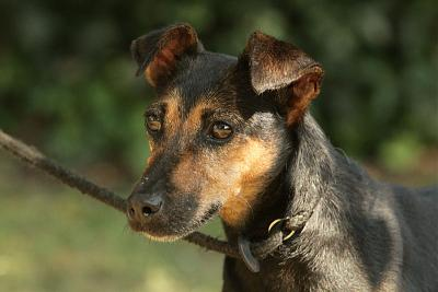 Lina, petite chienne adorable-075.jpg