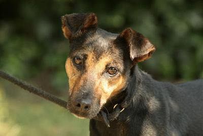 Lina, petite chienne adorable-078.jpg