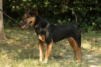 Lina, petite chienne adorable-080.jpg