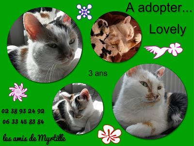 Lovely chatte trico 3 ans à adopter ss contrat aux amis de myrtille (45)-montage-lovely.jpg
