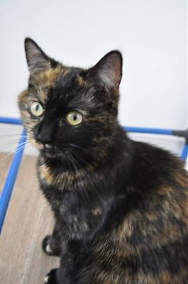 Maddy à adopter sous contrat citanimal-maddy.jpg
